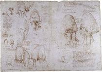 Leonardo / Ochsenherz Venen Kammer/f. 166v von AKG  Images