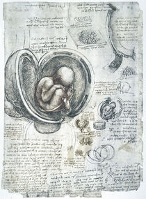 Leonardo / Fötus Uterus Steißlage/f. 198 r by AKG  Images