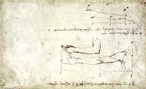Vinci / Arm und Hand / Studie / fol. 26 r by AKG  Images