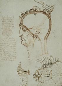 Vinci / Schichten der Kopfhaut / fol. 32 r von AKG  Images