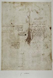 Leonardo / Pferd innere Organe / fol. 35 v by AKG  Images