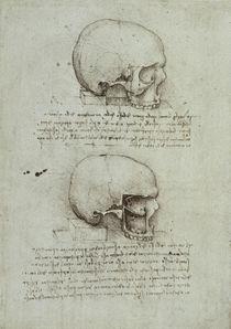 Leonardo / Schädel / Kiefernhöhle / fol. 43 v von AKG  Images