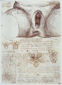 Leonardo / Vulva nach Geburt / After / fol 54r von AKG  Images