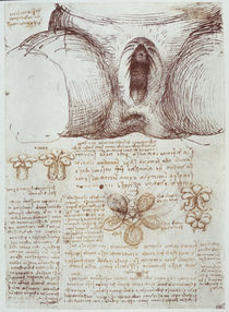 Leonardo / Vulva nach Geburt / After / fol 54r by AKG  Images