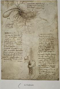 Leonardo / Milz–, Leber–, Magengefässe/f. 61r von AKG  Images
