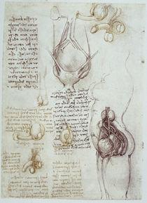 Leonardo / Genitalien männl. weibl. / fol 54v by AKG  Images