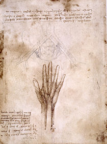 Leonardo / Becken / Hand und Finger / fol. 67v by AKG  Images