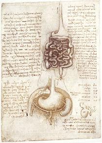 Leonardo / Verdauungsapparat u. a. / fol. 73v von AKG  Images
