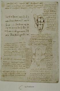 Leonardo / Bauchwand-Muskulatur / fol. 74 r by AKG  Images