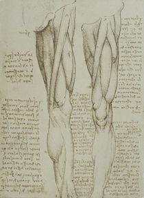 Leonardo / Bein-Muskulatur / fol. 77 v by AKG  Images