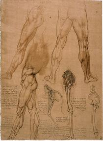 Leonardo / Beinmuskulatur / Pferdebein/f. 95r by AKG  Images