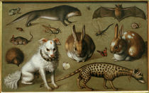 L. Tom Ring, Animal picture / 1560 by AKG  Images