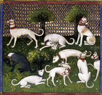 Hunting dogs (Alan) / Livre de la Chasse by AKG  Images