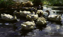 Alexander Koester, Ducks in the pond by AKG  Images