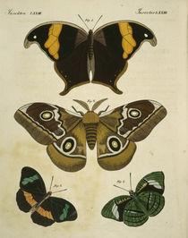 Schmetterlinge / aus Bertuch 1813 von AKG  Images