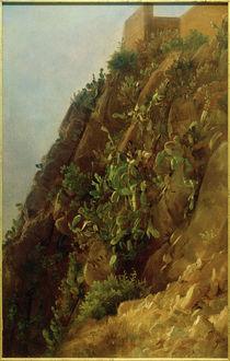 C.Morgenstern, Opuntien am Hang auf Capri by AKG  Images