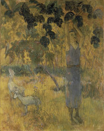 P.Gauguin / Man Picking Fruit / 1897 by AKG  Images