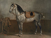 Lipizzaner, after Otto Eerelman by AKG  Images