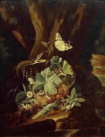 Johann Falch, Insekten, Schnecken und Schlange von AKG  Images