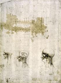 Leonardo / Gehirn mit Nervenbahnen/f. 103r by AKG  Images