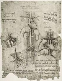 Leonardo / Bauch Brustkorb / fol. 107 r von AKG  Images