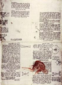 Leonardo / Physiologie des Sehens/f. 118 r by AKG  Images