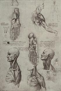 Leonardo / Fuß Schulter Hals / fol. 134 v by AKG  Images