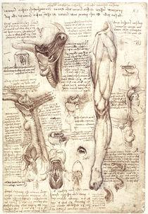 Leonardo / Zunge Rachen u. a. / fol. 134 r by AKG  Images