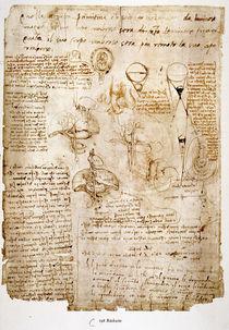 Leonardo / Melzi / Abdomen / Embryo / fol. 198 v by AKG  Images