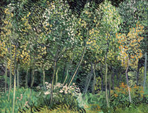van Gogh / Small forest / July 1890 by AKG  Images