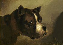 Head of a Bulldog / Th. Géricault / Painting 1812 by AKG  Images