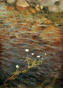 E.Järnevelt / Water Ranunculus / 1895 by AKG  Images