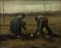 V. van Gogh, Planting potatoes / 1885 by AKG  Images