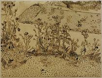 V. v. Gogh, Thistles along Roadside / Draw. by AKG  Images