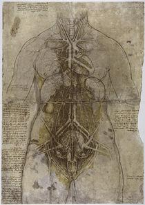 Leonardo / Frau Hauptorgane Arterien/f122r by AKG  Images