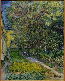 Van Gogh / St.–Rémy Hospital Garden by AKG  Images