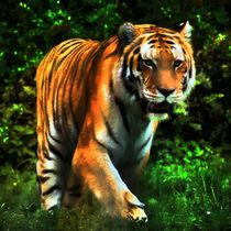 Tiger im Dschungel 4 by kattobello