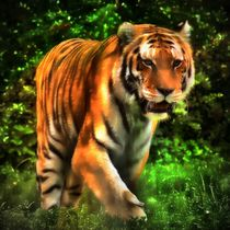Tiger im Dschungel 3 by kattobello