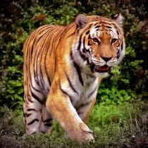 Vintage Tiger von kattobello