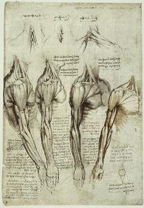Leonardo / Arm– Schulter-Brustmuskel/f140v by AKG  Images