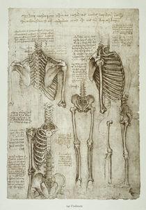 Leonardo / Menschl. Skelett / fol. 142 r von AKG  Images
