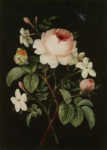 Rose and jasmine flower arrangement by AKG  Images