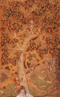 Johnson Album I, No.30 Squirrels on a plane tree von Abu'l Hasan