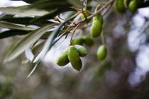Grüne Oliven by Sonja Dürnberger