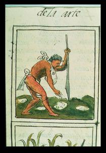 Ms Palat. 218-220 Book IX An Aztec man planting maize von Spanish School