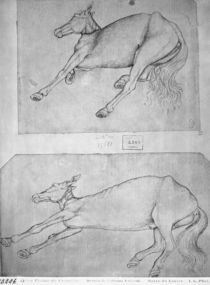 Dead horses, from the The Vallardi Album by Antonio Pisanello