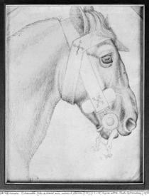 Head of a horse, from the The Vallardi Album von Antonio Pisanello