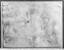 Sheet of studies, from the The Vallardi Album by Antonio Pisanello