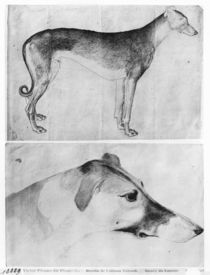 Greyhound and head of a greyhound by Antonio Pisanello