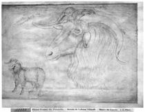 Ram and head of a ram, from the The Vallardi Album von Antonio Pisanello